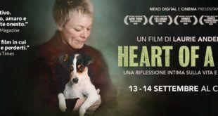 heart of a dog testata